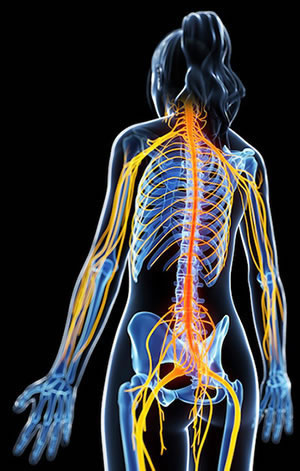 Nerves In Womans Body Treated By Multiple Sclerosis Chiropractic Treatments